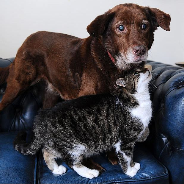 perierga.gr - Γάτα καθοδηγεί τυφλό σκύλο!