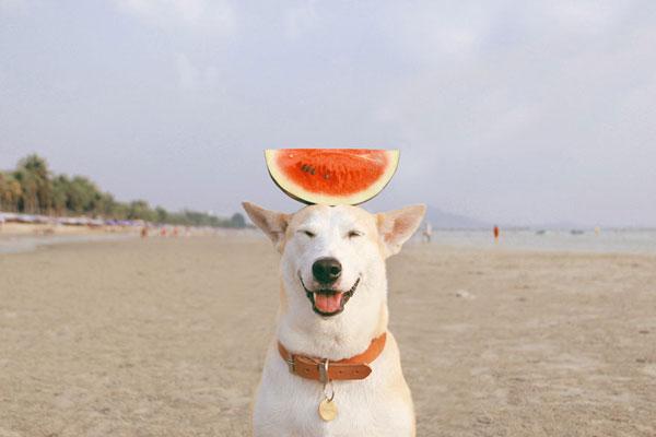 perierga.gr - Ο πιο ευτυχισμένος σκύλος στον κόσμο!