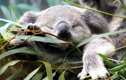perierga.gr - Ποιο ζώο κοιμάται 20 ώρες το 24ωρο;