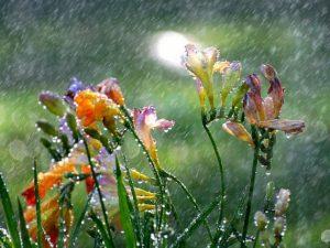 perierga.gr - Γιατί μυρίζει η βροχή και πότε η οσμή είναι εντονότερη;