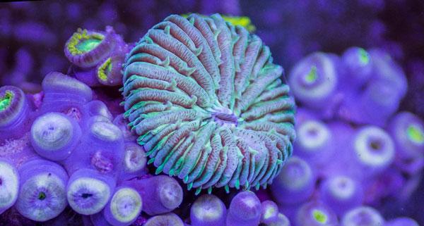 perierga.gr - Η εκπληκτική υποβρύχια ζωή!