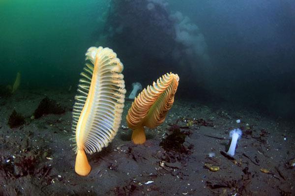 perierga.gr - Οι όμορφοι κόνδυλοι της θάλασσας!
