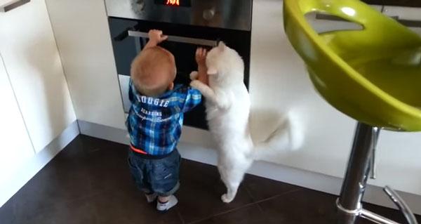 perierga.gr - Γάτα σώζει μωρό που θέλει να ανοίξει αναμμένο φούρνο!