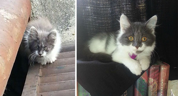 perierga.gr - Γάτες που σώθηκαν από βέβαιο θάνατο!