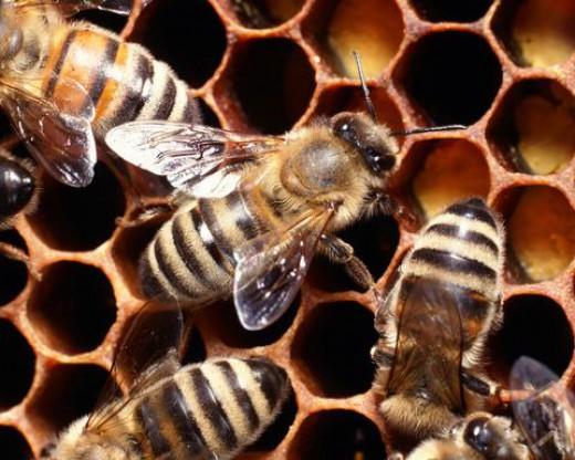 perierga.gr - Οι μέλισσες αναγνωρίζουν ανθρώπινα πρόσωπα!