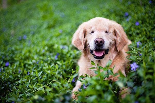 perierga.gr - Τυφλός σκύλος βοηθά αναπήρους!