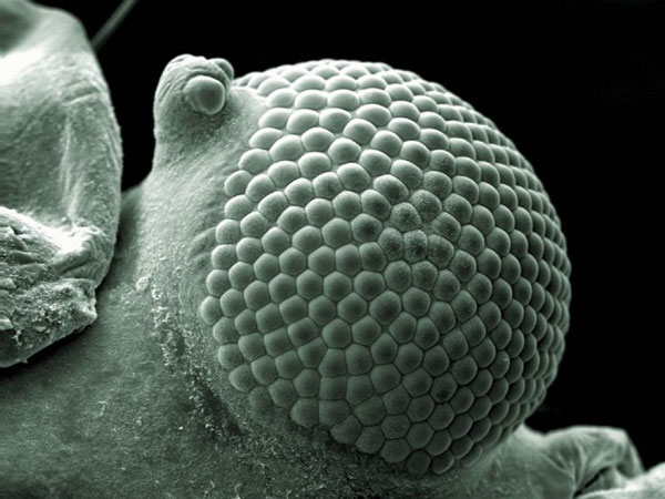 perierga.gr - Οι καλύτερες επιστημονικές φωτογραφίες της χρονιάς