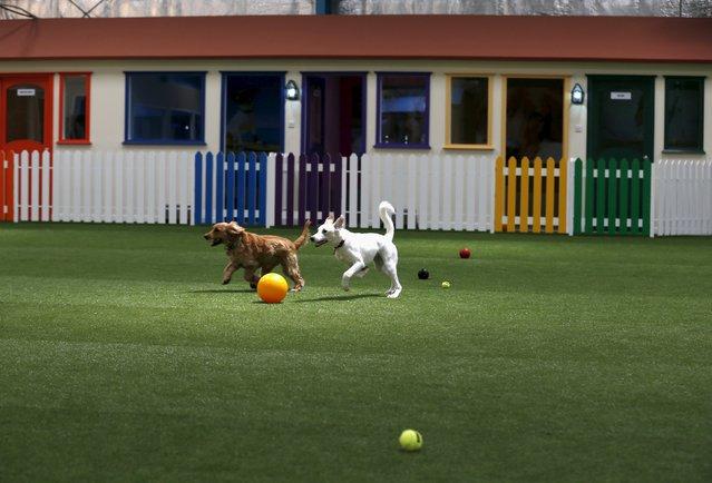 perierga.gr - Το μεγαλύτερο (και πολυτελέστατο) πάρκο για σκύλους στο Ντουμπάι!