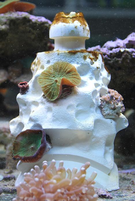 perierga.gr - Τα Lego σώζουν τους κοραλλιογενείς υφάλους!