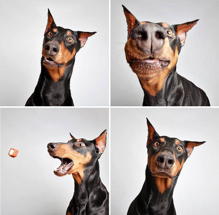 perierga.gr - Η πιο ευφάνταστη καμπάνια υιοθεσίας αδέσποτων σκυλιών!