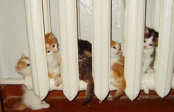 perierga.gr - Τα ζώα αγαπούν τη ζέστη!