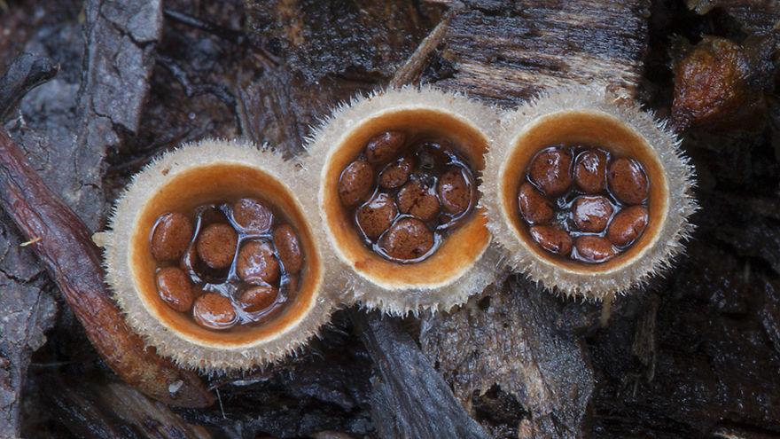 perierga.gr - Πανέμορφα μανιτάρια της Αυστραλίας!