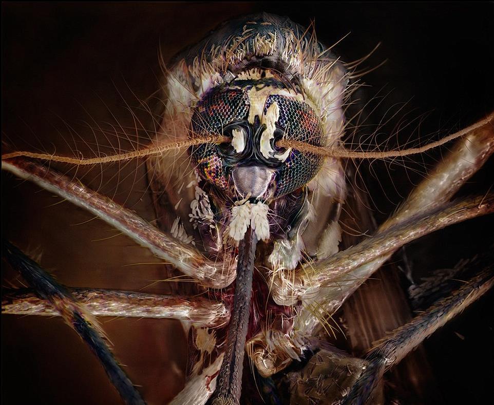 perierga.gr - Alien που ζουν στα σπίτια μας αποκαλύπτονται στο μικροσκόπιο!