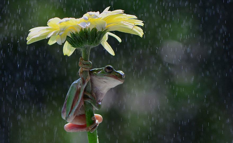 perierga.gr - Ζώα κάτω από φυσικές ομπρέλες!