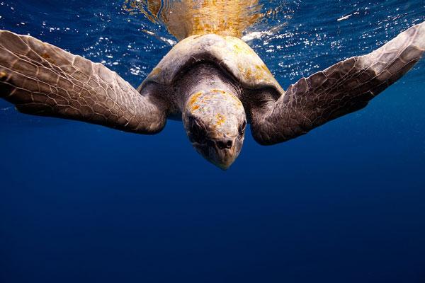 perierga.gr - Καρέ-καρέ ένα μαγικό ταξίδι κάτω από το νερό!