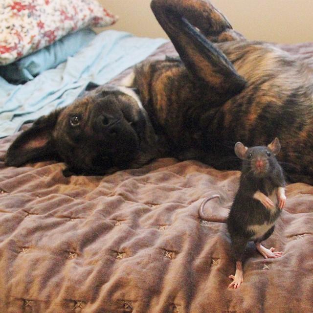 perierga.gr - Σκύλος και... ποντίκι, τα καλύτερα φιλαράκια!