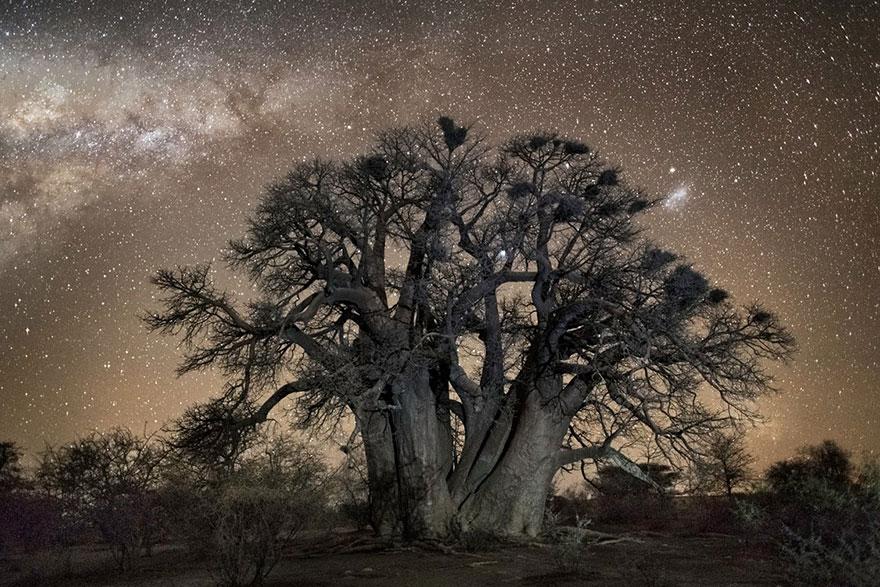 perierga.gr - Τα ηλικιωμένα δέντρα της γης φωτογραφίζονται τη νύχτα!