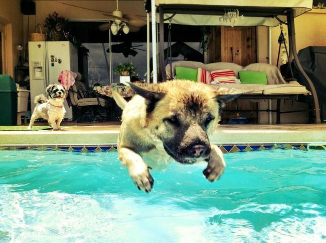 perierga.gr - Ζώα δροσίζονται στο νερό!