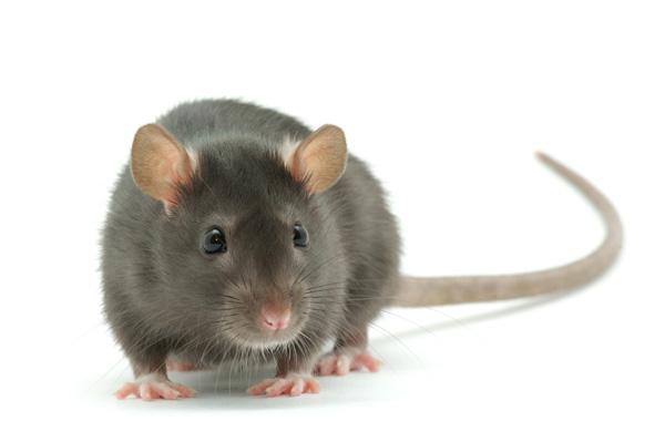 perierga.gr - Eντυπωσιακές ικανότητες των ζώων που δεν γνωρίζουμε!