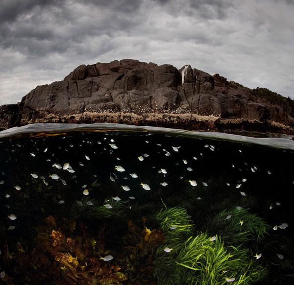 perierga.gr - Φωτογραφίες πάνω & κάτω από το νερό!