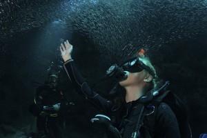 perierga.gr - Κολυμπώντας ανάμεσα σε ένα εκατομμύριο ψάρια!