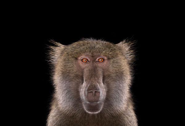 perierga.gr - Ζώα της άγριας ζωής κοιτάζουν κατάματα την κάμερα!