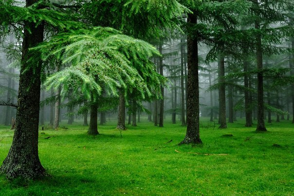 perierga.gr - Πώς ένα δάσος μπορεί να ρυπάνει το περιβάλλον;
