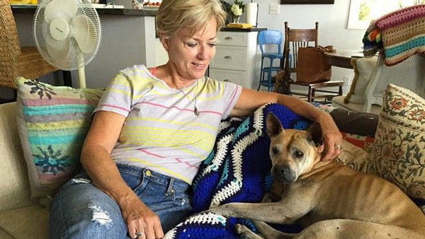 perierga.gr - Σκυλίτσα περπάτησε 66 χλμ. για να γυρίσει σπίτι της!