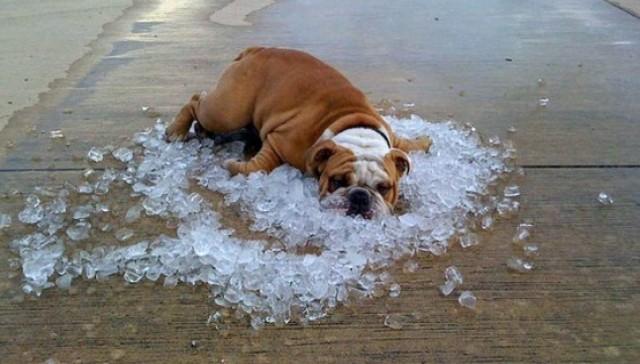perierga.gr - Zώα δροσίζονται στη ζέστη!