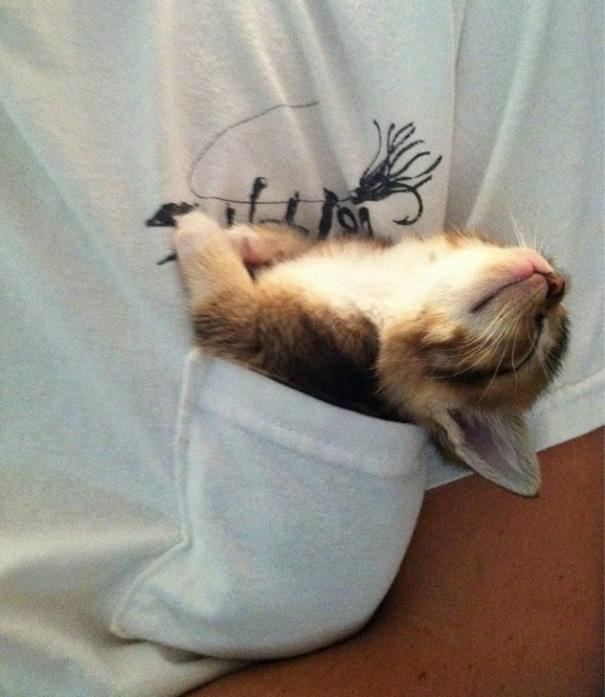 perierga.gr - Γάτες στην αγκαλιά του Μορφέα!