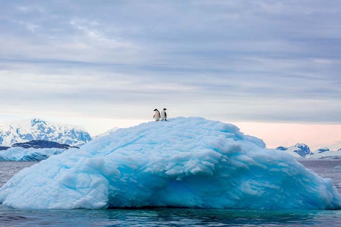 perierga.gr - Νέες εξαιρετικές είσοδοι στο διαγωνισμό National Geographic 2015!
