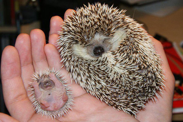 perierga.gr - Ζώα που δεν τα έχουμε δει ως μωρά!