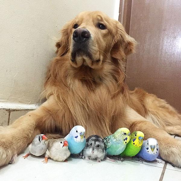 perierga.gr - Μια παρέα ζώων διαφορετική από τις άλλες!