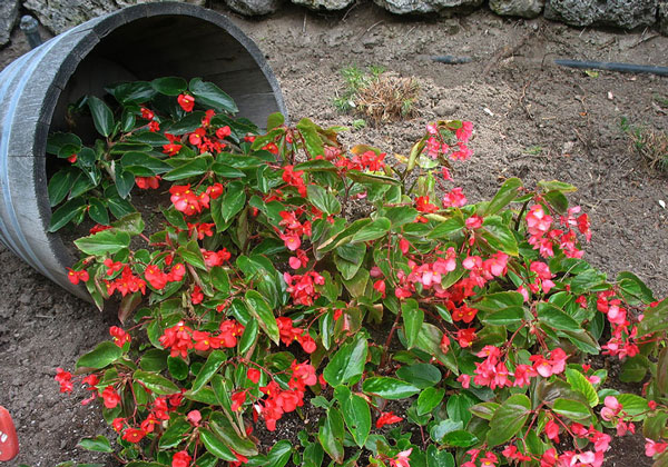 perierga.gr - Ευφάνταστες γλάστρες δημιουργούν... ροή λουλουδιών!