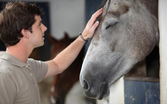 perierga.gr - Τα άλογα και οι άνθρωποι έχουν κοινές εκφράσεις προσώπου