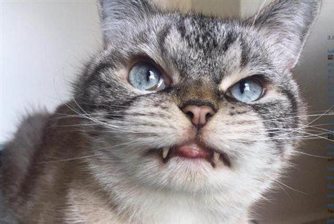 Perierga.gr - Γάτα μοιάζει με... δράκουλα και σαρώνει το διαδίκτυο