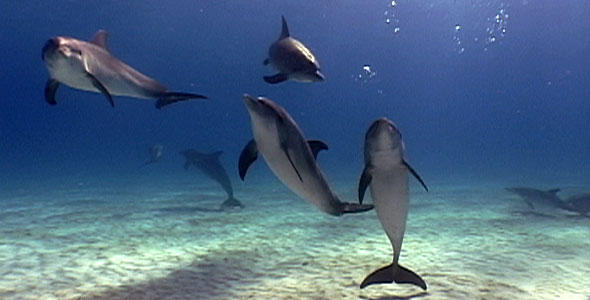 perierga.gr - Τα δελφίνια κάνουν μπέιμπι σίτινγκ!