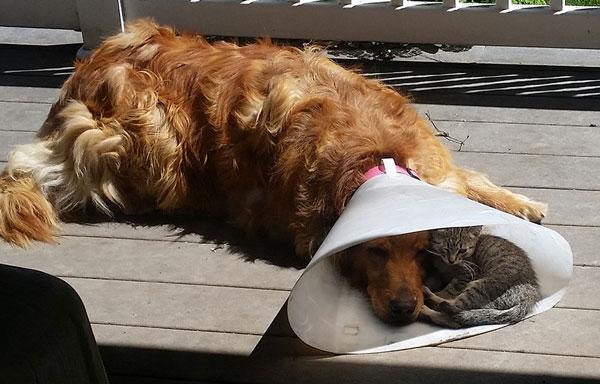 perierga.gr - Είναι τέλειο να έχεις έναν φίλο όταν τον χρειάζεσαι!