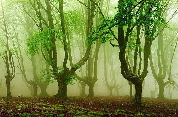 Perierga.gr - Ένα υπέροχο απόκοσμο δάσος!