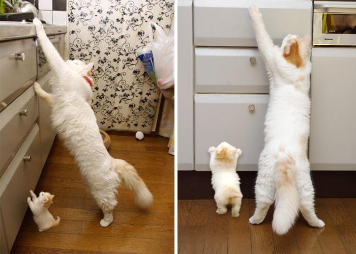 perierga.gr - Γάτες με τα ολόιδια μωρά τους!
