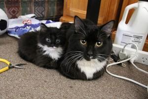 Γάτες με τα ολόιδια μωρά τους!