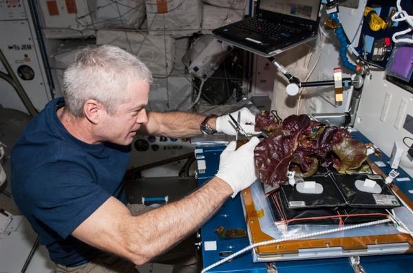 perierga.gr - Σαλάτα από ντόπια συγκομιδή στον Διεθνή Διαστημικό Σταθμό!