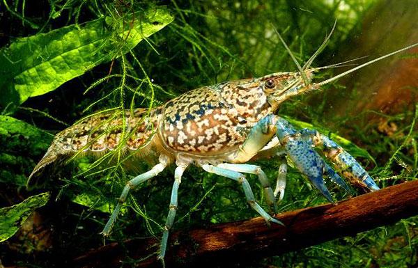perierga.gr - Γενετικό ατύχημα «δημιούργησε νέο είδος χωρίς αρσενικά»!