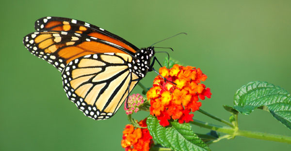 perierga.gr - Η εκπληκτική μεταμόρφωση μιας πεταλούδας σε ένα βίντεο!