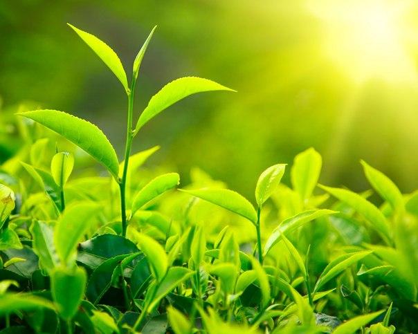 perierga.gr - Τα φυτά μιλάνε σαν τα ζώα όταν βρίσκονται σε κίνδυνο!
