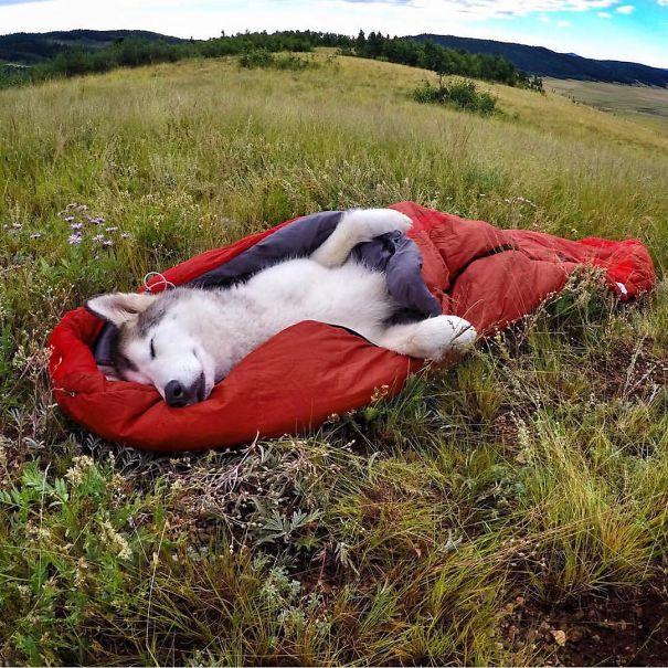 perierga.gr - Στο κάμπινγκ με τον σκύλο!