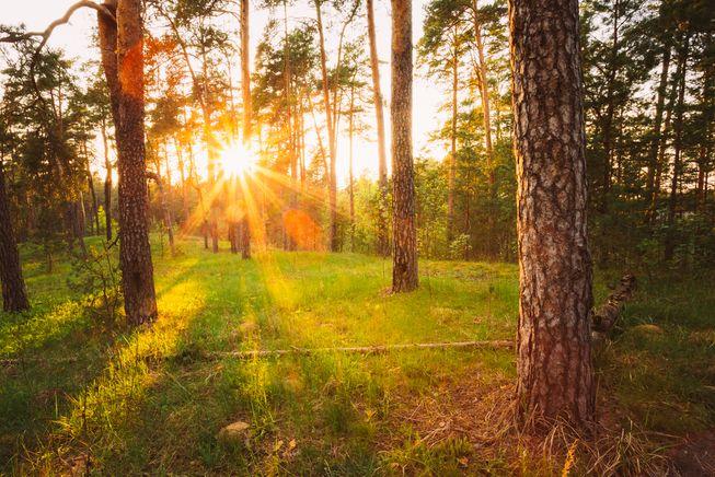 perierga.gr - Ποια χώρα έχει τα περισσότερα δέντρα στον κόσμο;