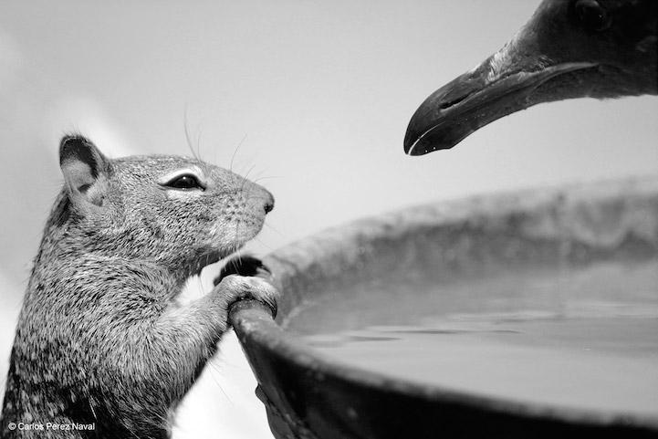 perierga.gr - Απίθανες εικόνες από το διαγωνισμό Φωτογραφίας Άγριας Ζωής 2015!
