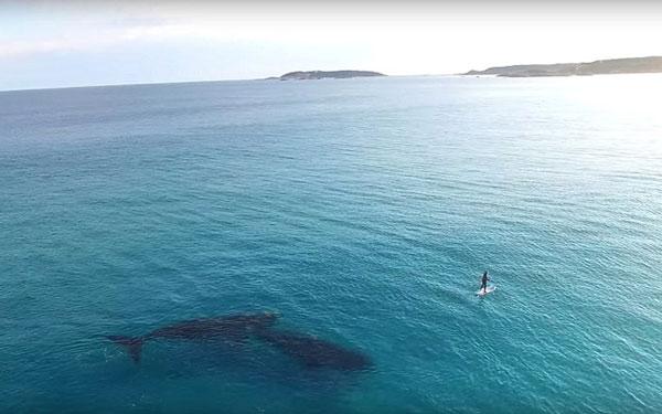 perierga.gr - Σέρφερ συναντά φάλαινα!