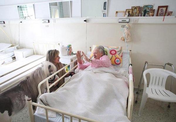 perierga.gr - Μικρά θεραπευτικά αλογάκια στην υπηρεσία των ασθενών!